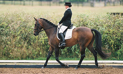 Dressage Horse Back Riding